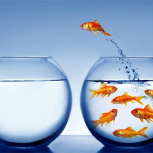 Independent goldfish