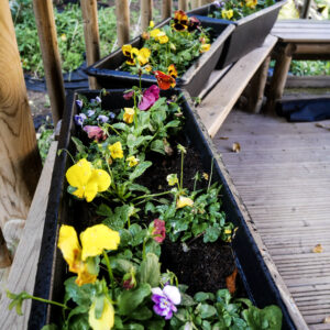 Colourful planters!
