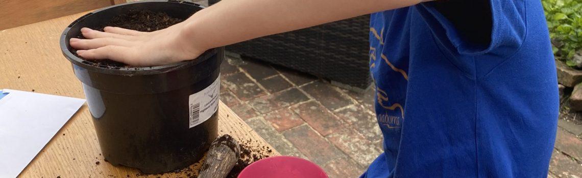 Leo planting his sunflower seeds